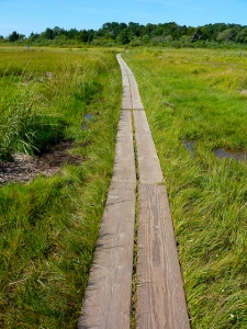 Cape Cod Grass Walk